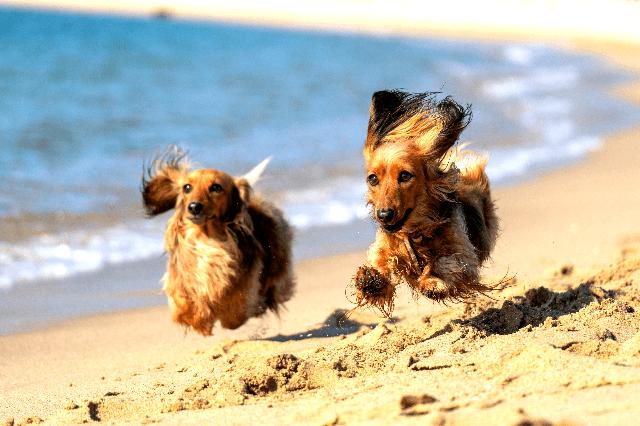 Dog-friendly beaches in Ireland